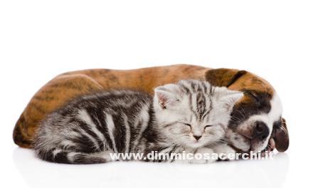 Campioni gratis per animali
