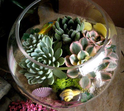 Vaso per piante grasse