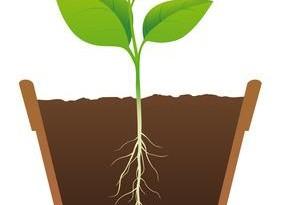Come propagare le piante in casa
