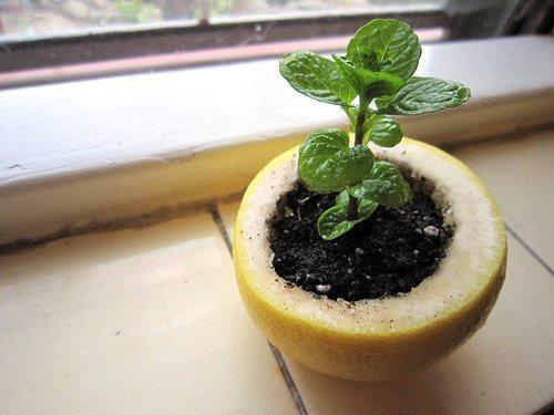 Vaso fatto con la buccia della frutta