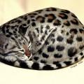 Gatti di pietra