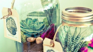 Decorazioni fai da te con le piante grasse