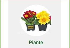 Campione omaggio etichette Tico per fiori e piante