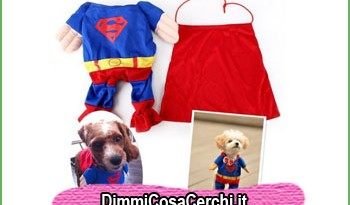vestiti simpatici per cani