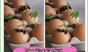 gusci di uovo