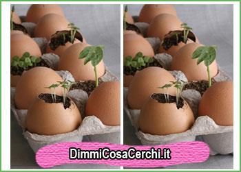 Guscio di uovo