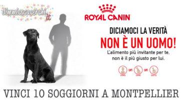 concorso royal canin