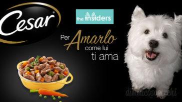 Diventa tester prodotti Cesar per il cane: 1.500 tester da selezionare!