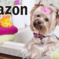 Amazon Pet Star: partecipa gratis