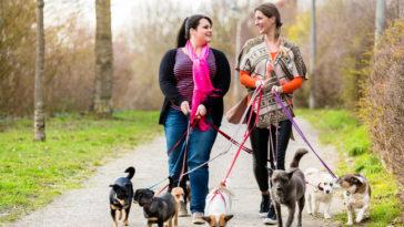 Come guadagnare con il dog sitter