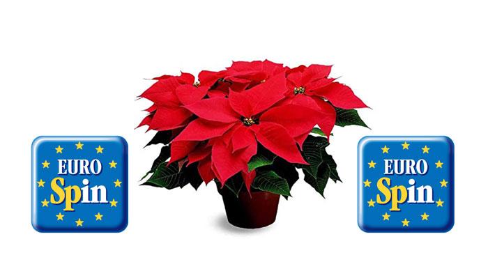 Eurospin ti regala la Stella di Natale