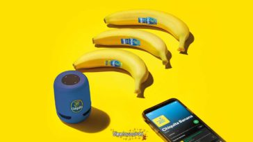 """Concorso Chiquita """"Yellow Banana"""""""