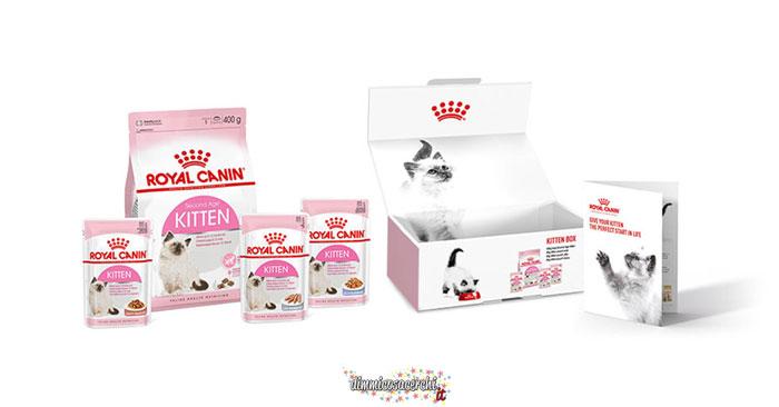 Royal Canin Kitten box omaggio